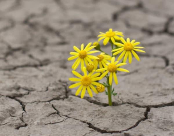 Resilienz Blume